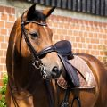 1006324-Snaffle-Bridle-2810-Switch-Magic-Tack.jpg
